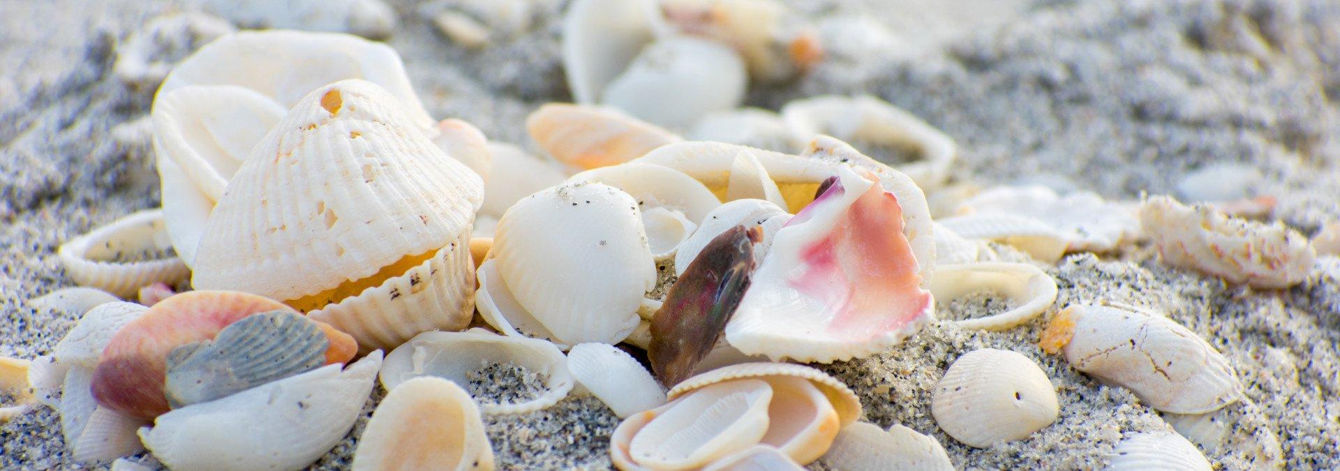 SGI Shells